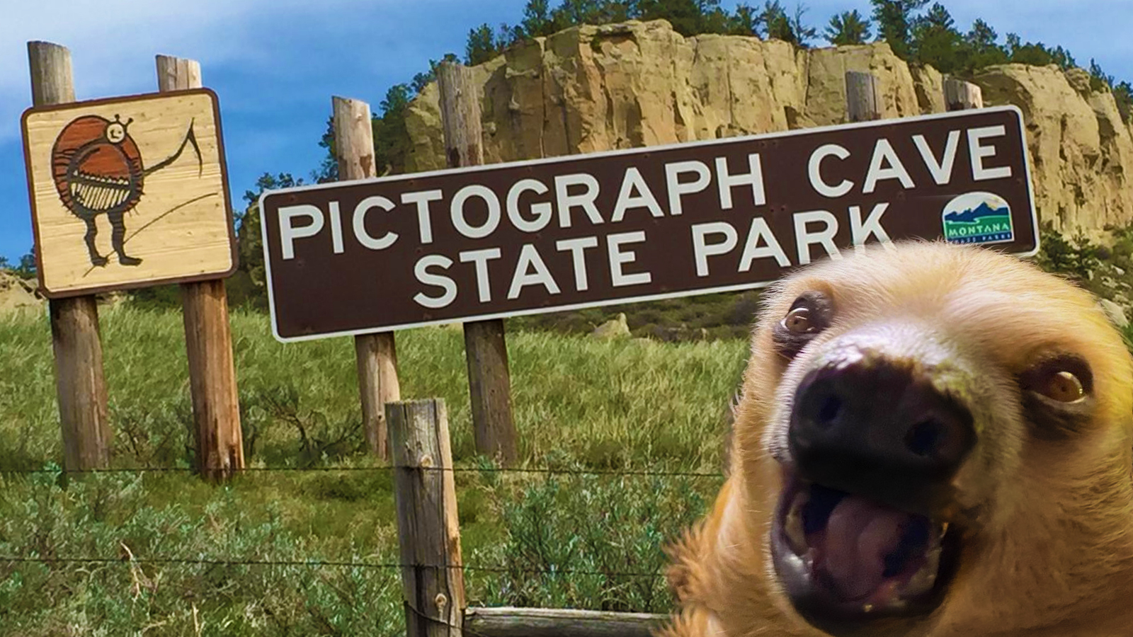 winston-the-sloth-image-state-park